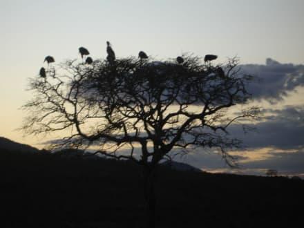 Abendruhe - Tsavo Ost Nationalpark
