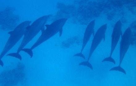 Delfine erleben mit Yasser - Delfinschwimmen Yasser