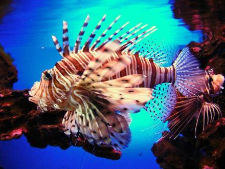 Fische in Loro Pargue - Loro Parque