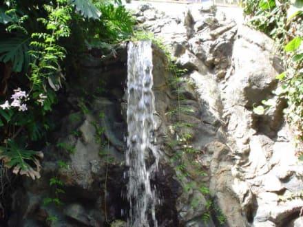 kleiner Wasserfall - Loro Parque