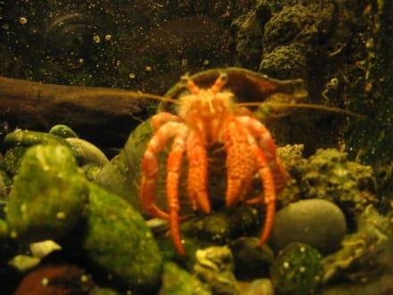 Blick in eines der Aquarien - Meerwasseraquarium