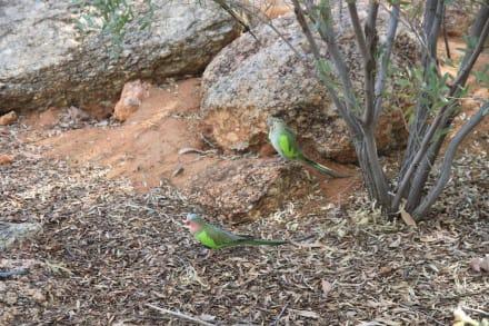 Nature reserve/Zoo - Alice Springs Desert Park
