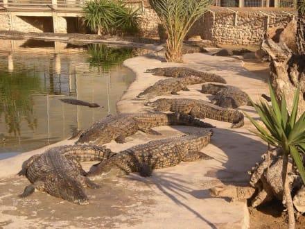 Aligatorzoo auf Djerba - Krokodilfarm Animalia