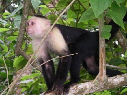 Nationalpark Cahuita - Cahuita Nationalpark