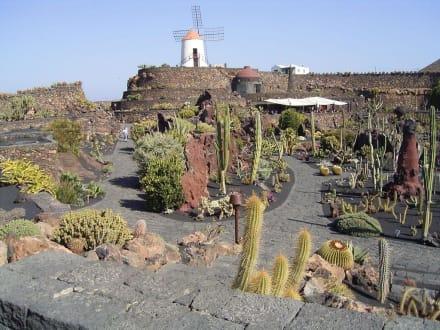 Aussicht vom Eingang aus - Jardin de Cactus / Kaktusgarten Guatiza