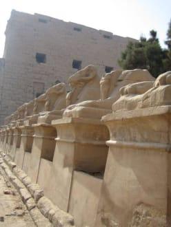 Die widderköpfige Sphingenallee - Amonstempel Karnak