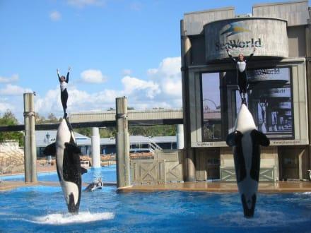 Shamu Show Seaworld - Sea World