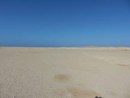 Wüste - Wüste