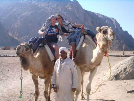 Kamele reiten ist einfach super... - Wüste