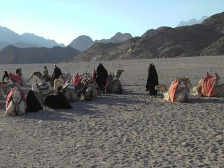 Bei den Beduinen - Jeep Safari Hurghada