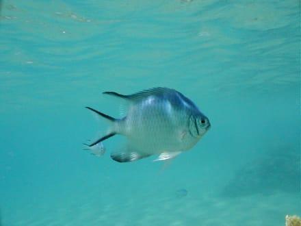 Rotes Meer - Tauchen Makadi Bay