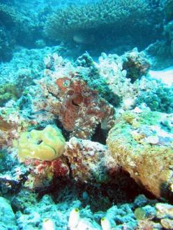 Oktupus - Aeolus Dive Fihalhohi