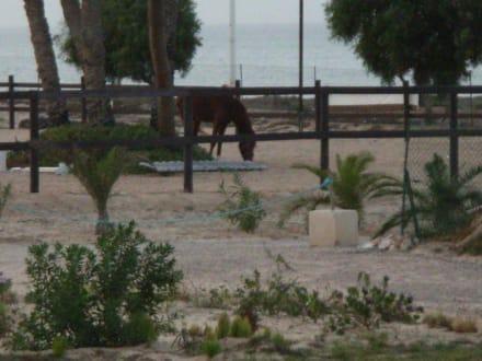 Gelände und Pferd - Royal Carriage Club