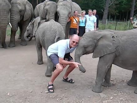 Zwei Dickschädel erkennen einander - Knynsa Elephant Park