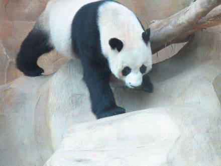 Chiang Mai, Zoo - Chiang Mai Zoo und Aquarium