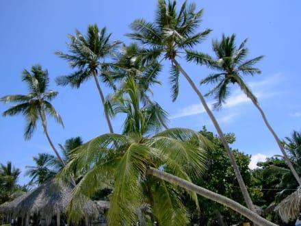 Palmen pur - Isla Saona