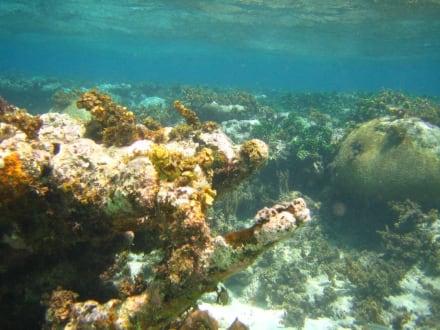 Schnorcheln bei der Paradiesinsel - Paradies Insel