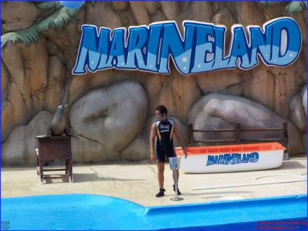 Vorführung Show der Seelöwen - Marineland
