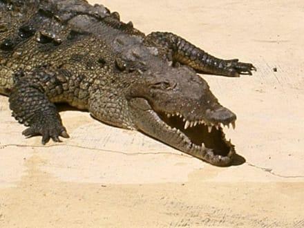 Krokodil - Manati Park Bavaro