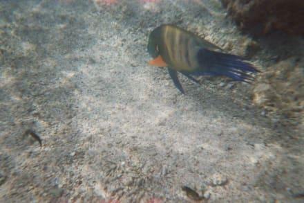 Schnorcheln in Strandnähe - Schnorcheln Sharm el Sheikh