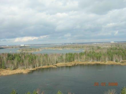 Blick vom Aussichtsturm - Senftenberger See