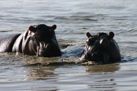 Safari im Ngorongoro Krater - Ngorongoro Reservat