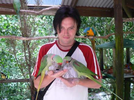Birdworld-Bewohner neugierig - Birdworld Kuranda