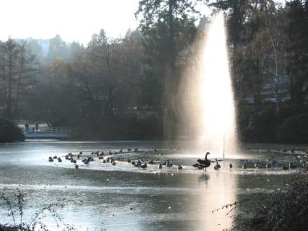 Enten am runden Wassertisch 17.02.03 - Kurpark Bad Schwalbach
