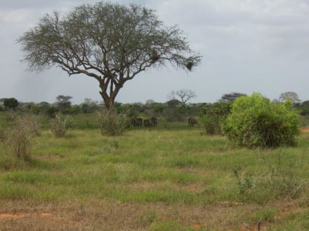 Nature reserve/Zoo - Tsavo East National Park