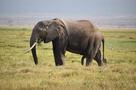 Elefanten  - D.M.-Tours