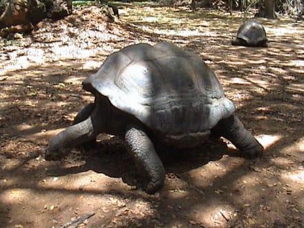 Schildkröte - Haller Park