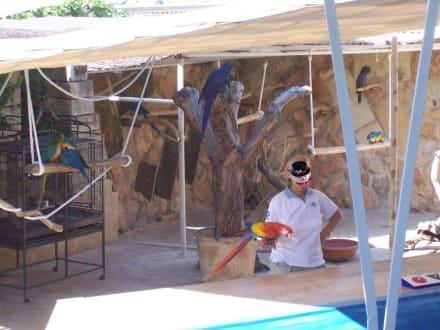 Marineland Papagai Show - Marineland