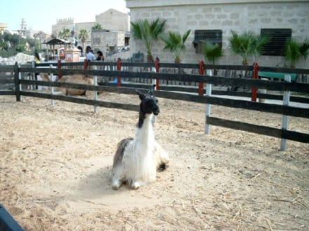 Tiergehege - Carthageland