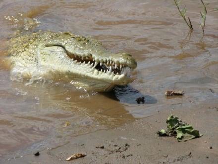 Scharfe Zähne - Tsavo Ost Nationalpark