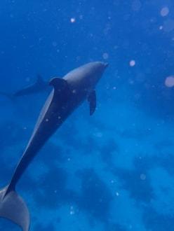 Delfintour - SimSim-Reisen