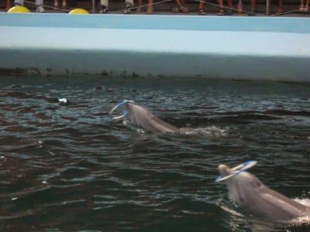 Delphinshow in Varna - Delfinarium Varna