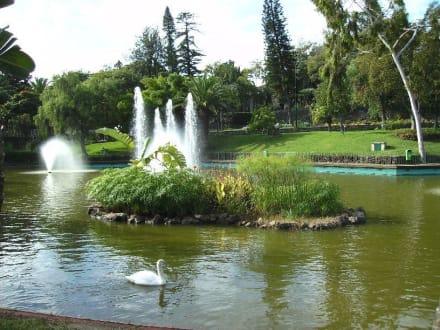 kleiner See mit Schwänen - Parque de Santa Catarina