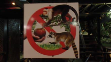Bitte die Tiere nicht füttern - Hotel & Club Punta Leona