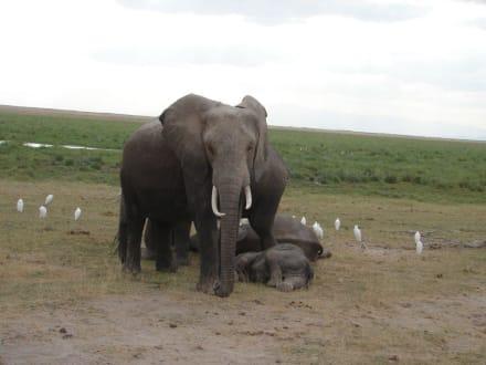 Elefantenfamilie - Amboseli Nationalpark