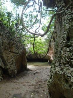 Im Naturschutzgebiet - Los Haitises Nationalpark