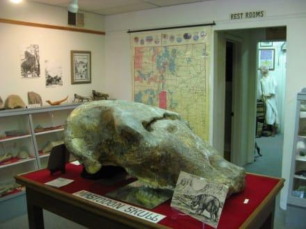 Mammutschädel im Geronimo Springs Museum - Geronimo Springs Museum