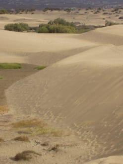 Dunas - Dünen von Maspalomas