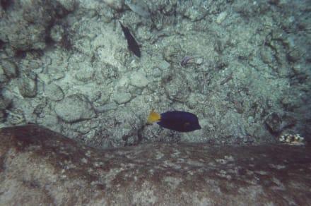 Fische - Schnorcheln Hurghada