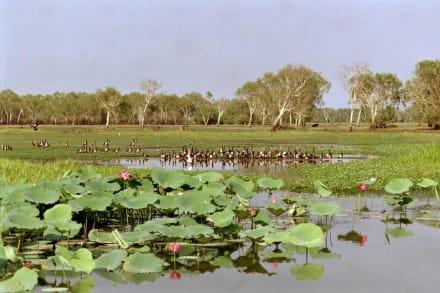 Kakadu Nt. Park - Yellow Waters