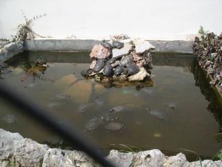 Wasserschildkröten - Aquarium (existiert nicht mehr)