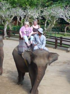Bilder Mit Elefant durch den Dschungel  Reisetipps