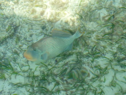 Schöne Unterwasserwelt - Schnorcheln Süd-Malé-Atoll