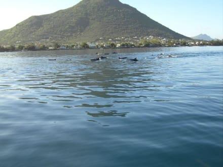Ausflug zum Delfinschwimmen - Dolswim - Dolphin & Whales Watching