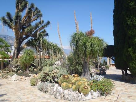 Exotische Pflanzen - Jardin Exotique