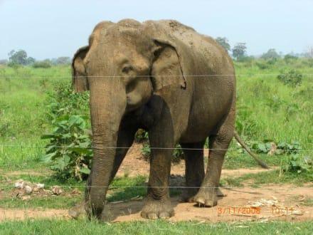 Auf dem Weg nach Jala, vorbei an Elefanten - Nationalpark Udawalawe
